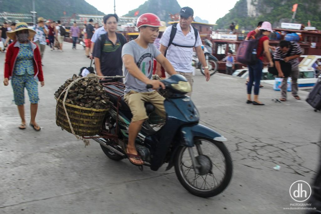 Bai Tu Long Bay - Oyster