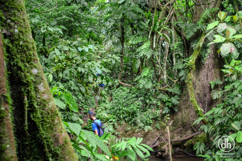 Luang Namtha - Dschungel Trekking