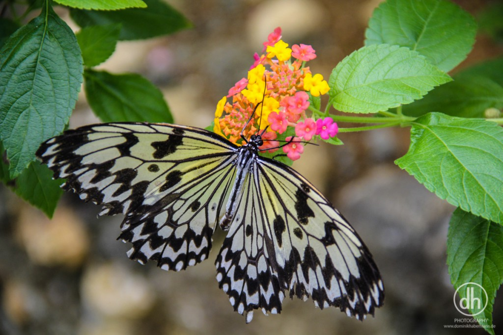 Siquijor - Butterflyfarm